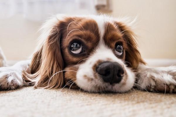 hund-teppich-min