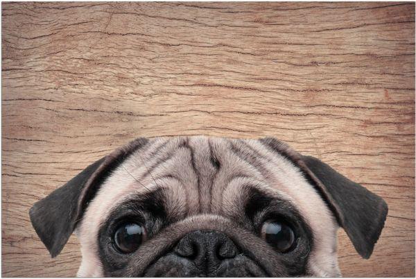 Fußmatte Fußabstreifer DECOR Mops lustiger Hund Mopsfan witzig waschbar 40x60 cm