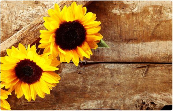 Tischset Platzset MOTIV Sonnenblumen auf Holz 1 Stk abwaschbar 43,5x28,5 cm