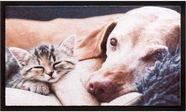 Fußmatte Fußabstreifer Decor & Rand Kätzchen schlafend & Hund waschbar 40x60 cm